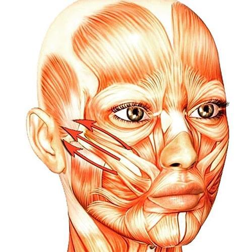 Мышцы на лице