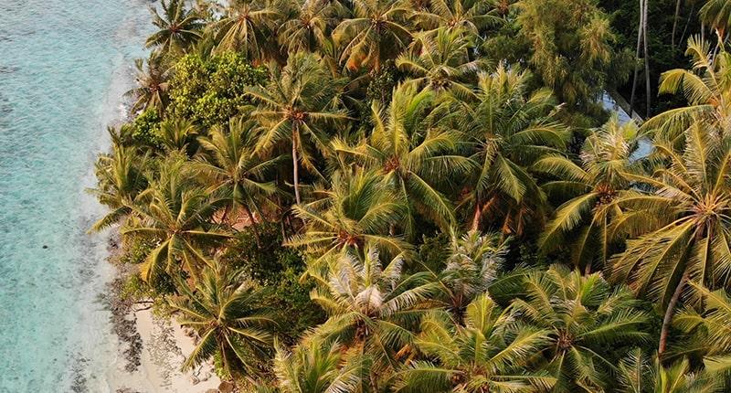 Рецепты из кокосового масла, которые быстро улучшают кожу на лице и теле
